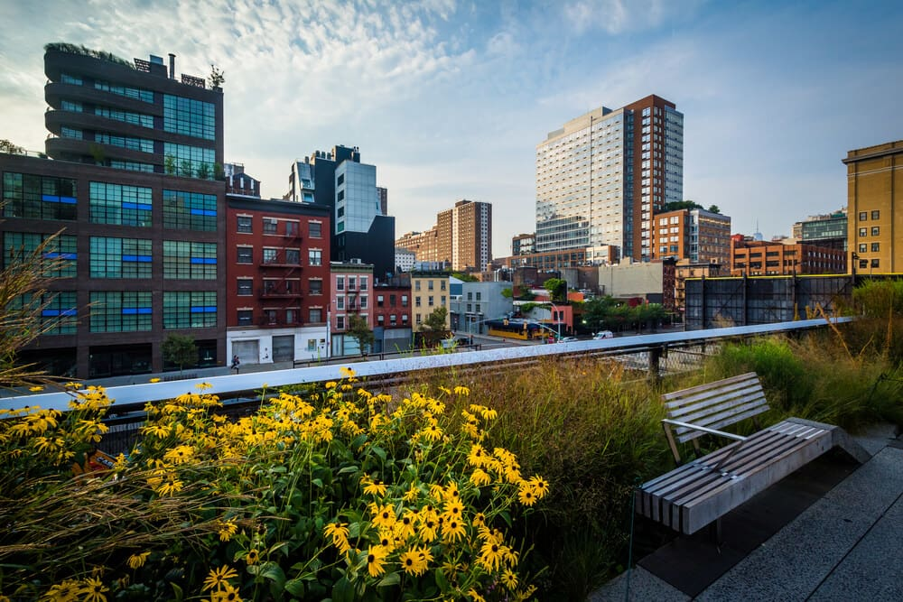 high line park in chelsea manhattan there is a wooden bench next to bright yellow flowers and tall buildings in the skyline in the background